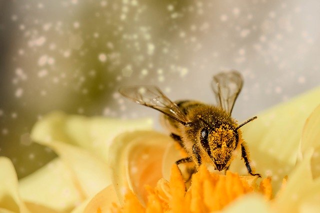 včela, práce, nektar